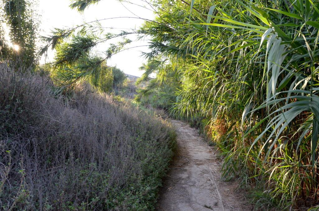 Camino de bambus